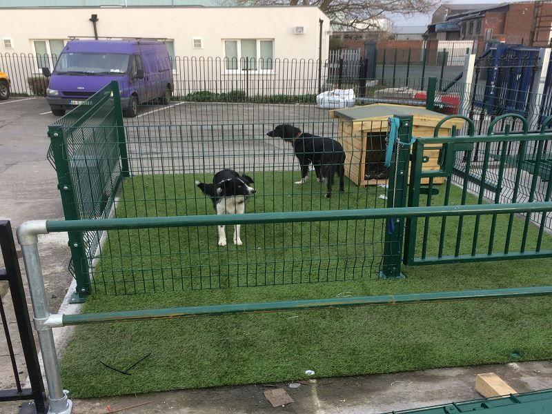 Buddy-Farley-Dog-Run