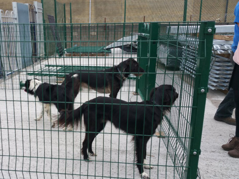 Dog Runs, Pens and Cages